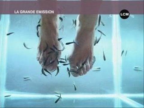 Les poissons s39occupent de vos pieds youtube for Parquet qui craque sous les pieds