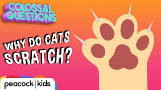 Why Do Cats Love Scratching? | COLOSSAL QUESTIONS
