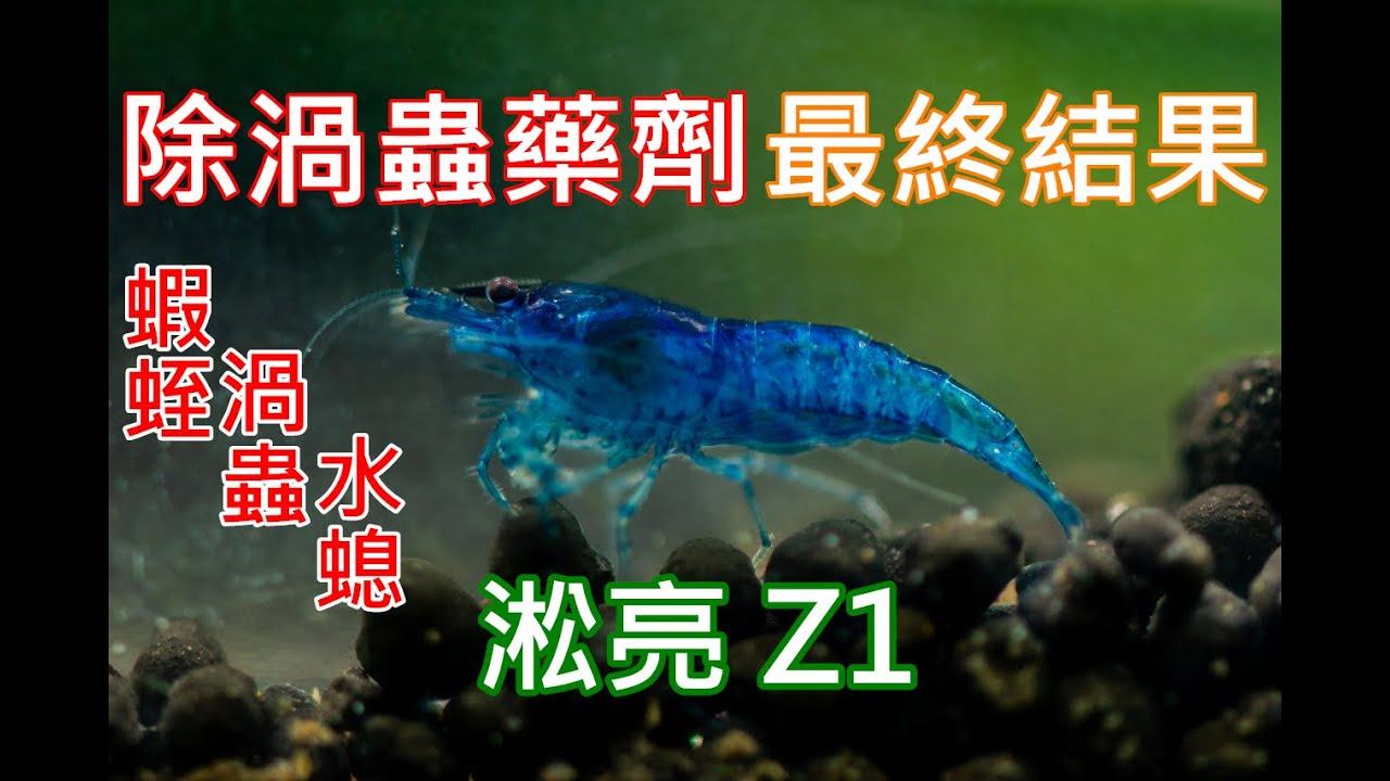 輕鬆除渦蟲 | 渦蟲蝦蛭水螅通殺! | 淞亮 Z1 實測(下) | SL AQUA Aquarium Bio Protector | clean planarian and hydra ...