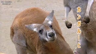 撮影場所=東山動物園 その他の動画はこちら(動画一覧)→https://www.y...