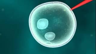Zwierzeta transgeniczne
