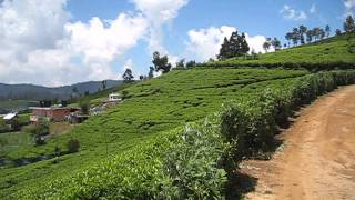 Nuwara Eliya - views over surrounding tea plantations