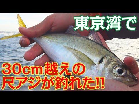 横浜沖堤防ででっかいアジが釣れた!【ぶっ込みサビキ釣り】