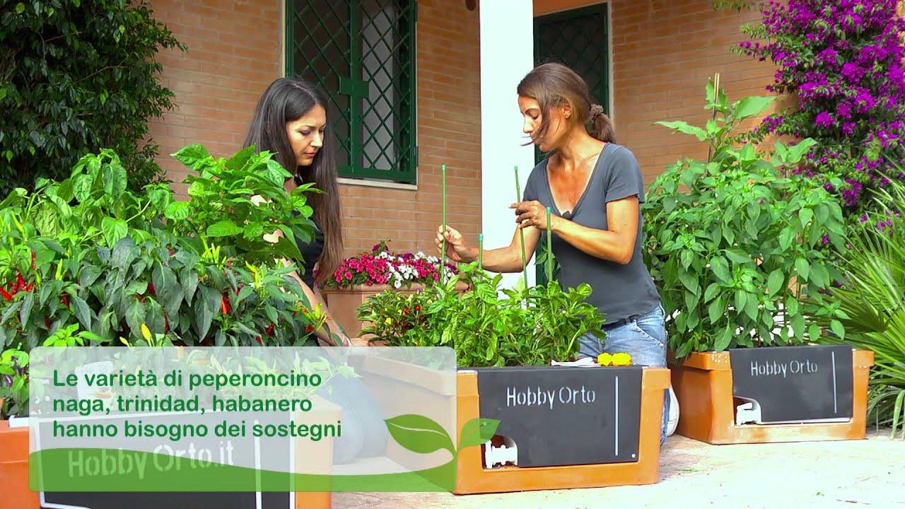 Coltivare peperoncini sul balcone di casa youtube for Coltivare sul balcone