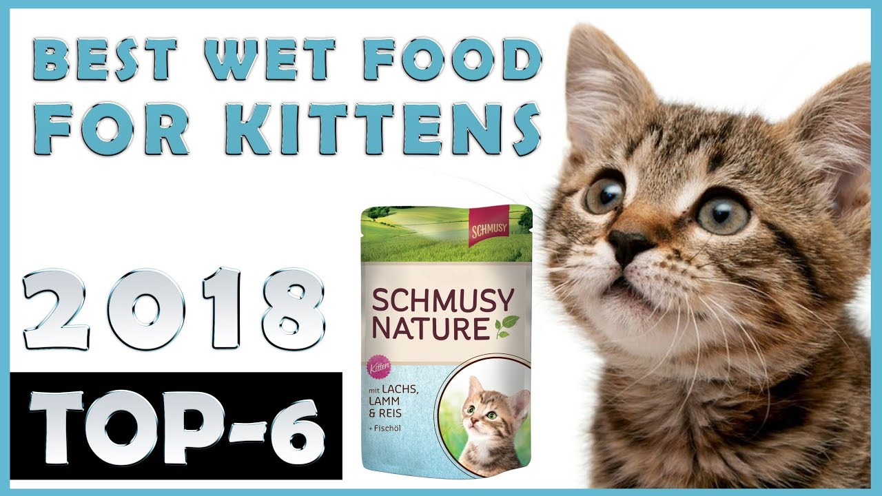 Best Wet Food For Kittens Review Top 6 Youtube