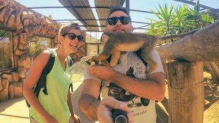 Monkey Park | TENERIFE 2016 | Adventure Travel