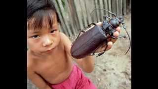 2013 Biggest insect in the world