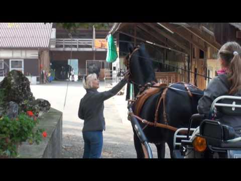 Video Kutschenfahrt 2014