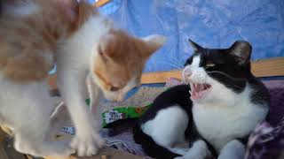 아기고양이 뒷마당 진출 훈련
