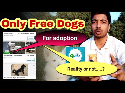 Why Dogs For Free Adoptation Is Showing On Quicker.