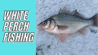 White Perch Fishing