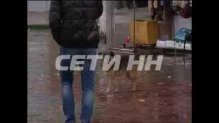 Жестокую травлю объявили бездомным животным в Автозаводском районе