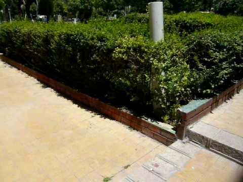 Gardens of National Museum,المتحف الوطني بدمشق , Damascus, Syria