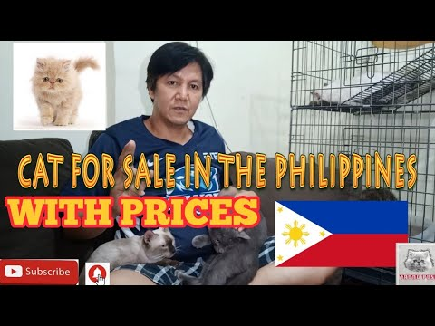 CATS FOR SALE IN THE PHILIPPINES WITH PRICES. vlog#38