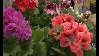 видео Купить цветы с доставкой в Сочи. Букеты на заказ круглосуточно по Сочи