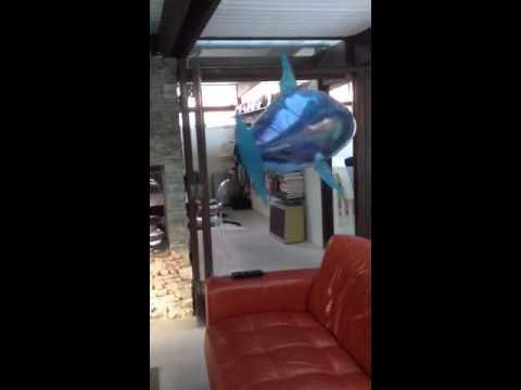 Shark in LBTS