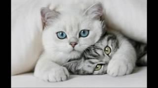 Самые милые киси в мире )))