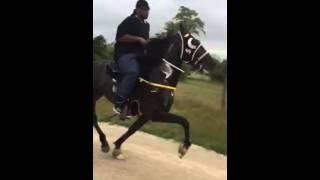 Repeat youtube video Speed Racking Stallion $Big Texas Lotto$