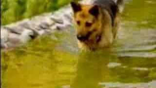 My dog catching fish