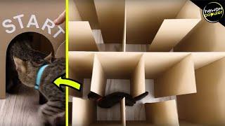 Ketika Hewan Dimasukkan Ke Dalam Labirin, Bisakah Kucing Ini Mencari Jalan Keluar?
