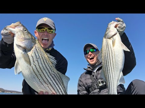 Big Striped Bass Crushing Bass Lures