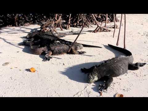 Galapagos Santa Cruz and Isabela islands