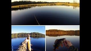 Рыбалка в Карелии 2015 Ловля окуня и щуки на спиннинг(Рыбалка в Карелии 2015 Ловля окуня и щуки на спиннинг В видео собраны несколько рыбалок. Приятного просмотра...., 2015-09-01T20:28:20.000Z)