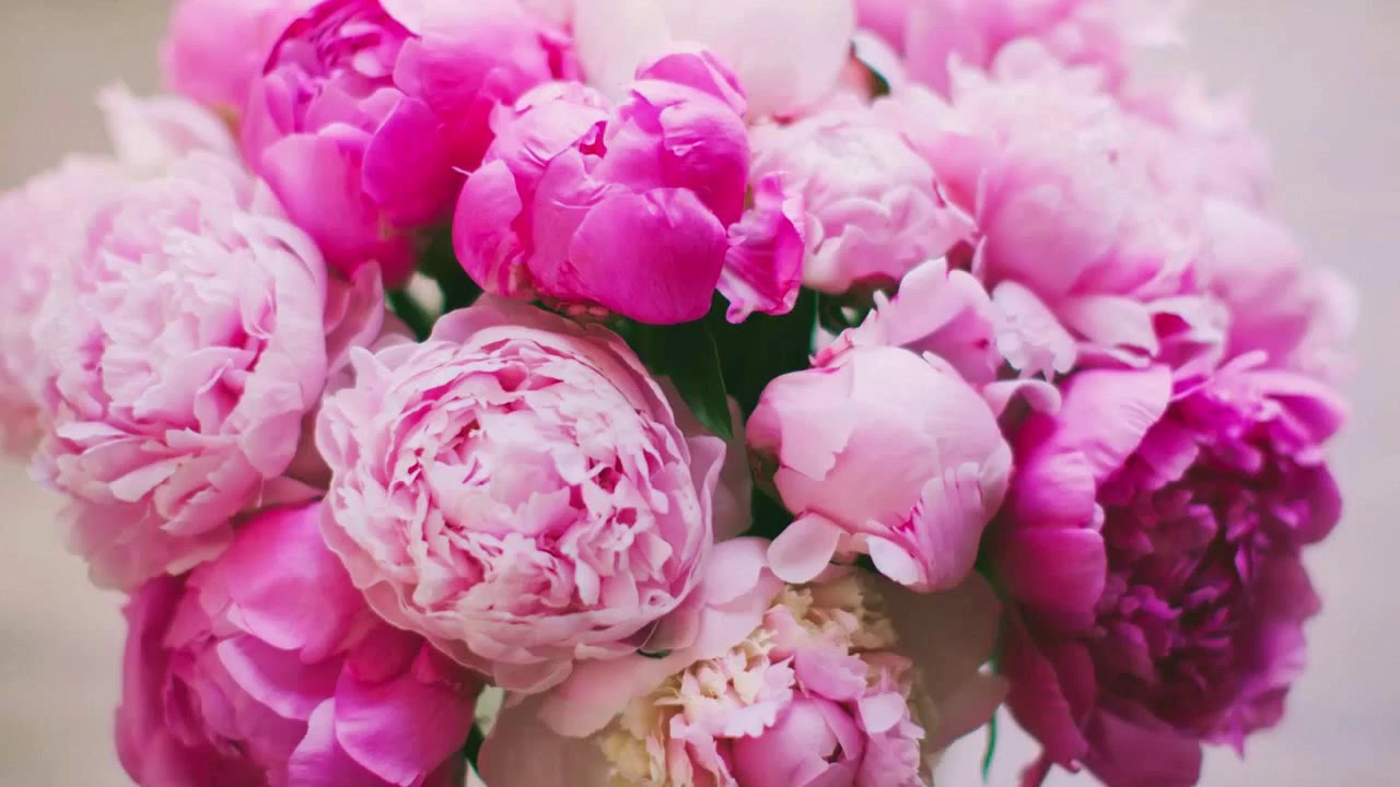 Пионы Бархатные Прикольные и очень красивые цветы ! - YouTube