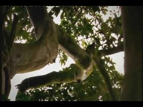 The Link - Darwinius Masillae - Ida Documentary - 3 of 6 BBC (21 of 30) ORKUT Community and Profile