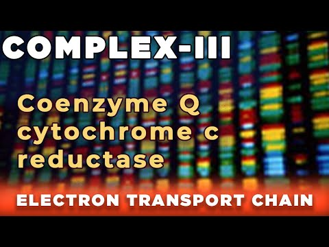 Electron transport chain COMPLEX - 3 (cytochrome c reductase