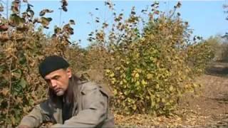 Uzgoj tartufa (Domacin.rs)