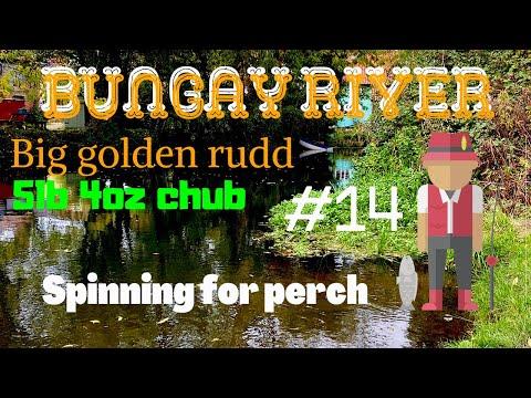 River Fishing Uk Bungay Big Chub Lovley Golden Rudd On Bread & Corn Spinning For Perch