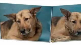 Дину переехала машина, ей очень нужна помощь !!(11 августа бездомную собаку Дину,которую подкармливала вся округа, возле сбербанка переехал какой-то урод!С..., 2011-10-11T22:17:32.000Z)