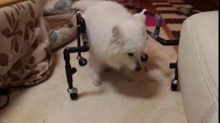 難航している犬用手作り車椅子 逆走ばかりでしたが、やっと一歩前進.