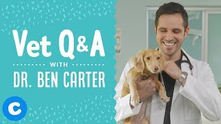 Veterinarian Dr. Ben Answers Your Pet Health Questions | Chewy