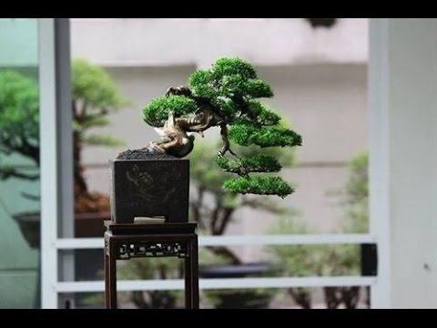 Classic Bonsai Of Japan Kengai Youtube