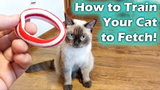 How to Teach your Cat to Catch, Cat Fetch (Cat Training)