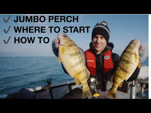 Early Season JUMBO Perch, Lake Erie (how To)