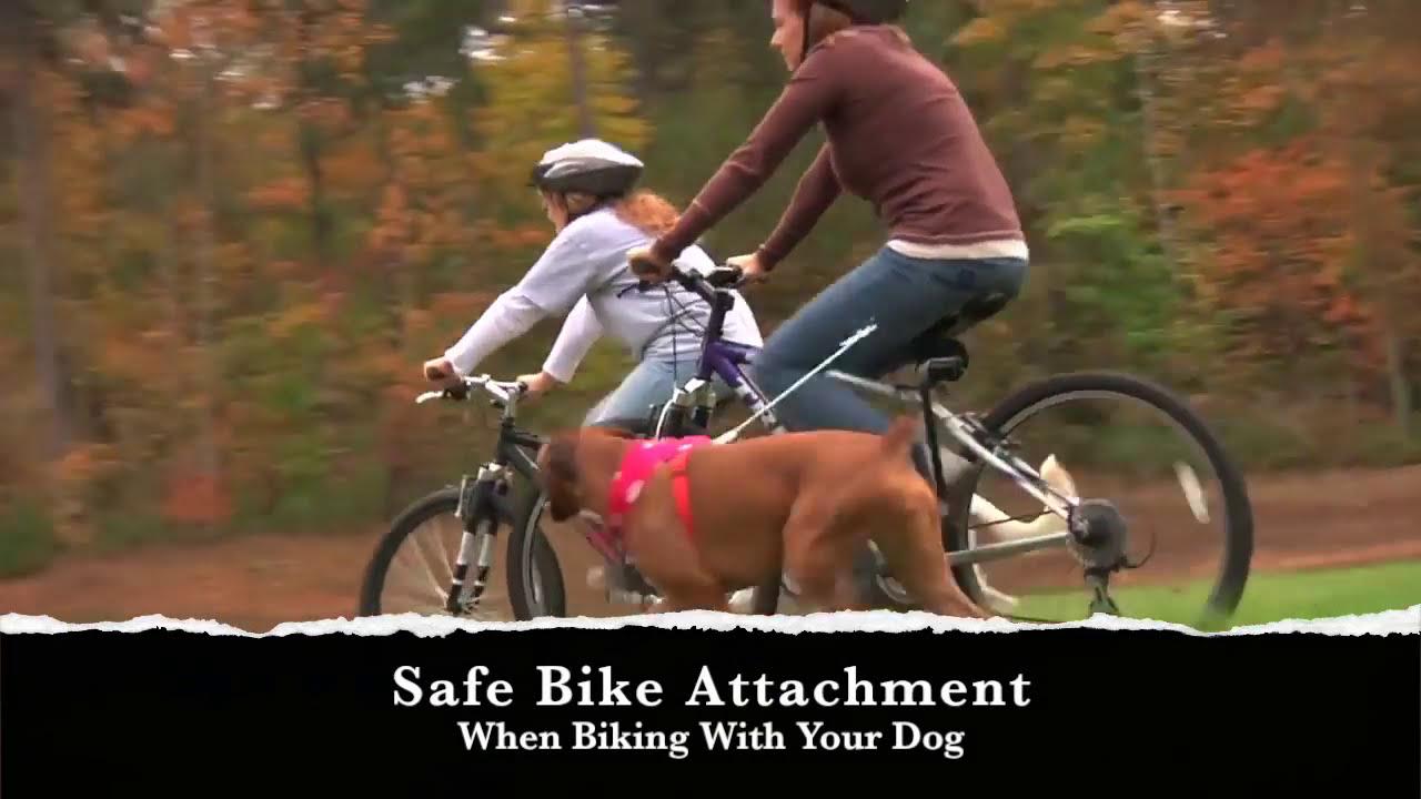 Safely Biking With Your Dog Springer Dog Exerciser Youtube