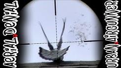 Air Rifle Pigeon Pest Control | Benjamin Marauder Pistol | Airgun Evolution