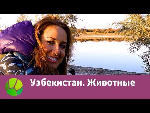 Узбекистан. Животные   Живые символы планеты   Живая Планета