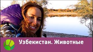 Узбекистан. Животные | Живые символы планеты | Живая Планета