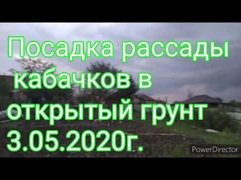 Посадка рассады кабачков в открытый грунт 3.05.2020г.