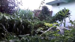 Garden of my home dumka