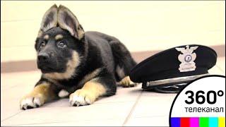 Полицейская собака из Испании покорила пользователей соцсетей - МТ
