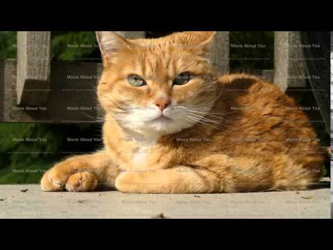 Beautiful ginger cat looking around
