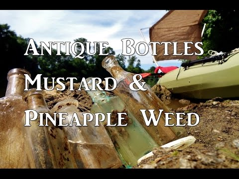 Foraging - Antique Bottles, Mustard and Pineapple Weed