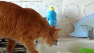 Кот ловит кальмара.