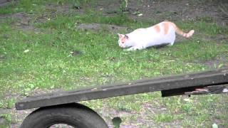 Süsse Katze will Maus nicht fangen xD