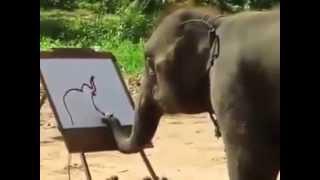 """فيديو مذهل لـ """"فيل"""" يرسم نفسه ويوقّع اللوحة باسمه"""